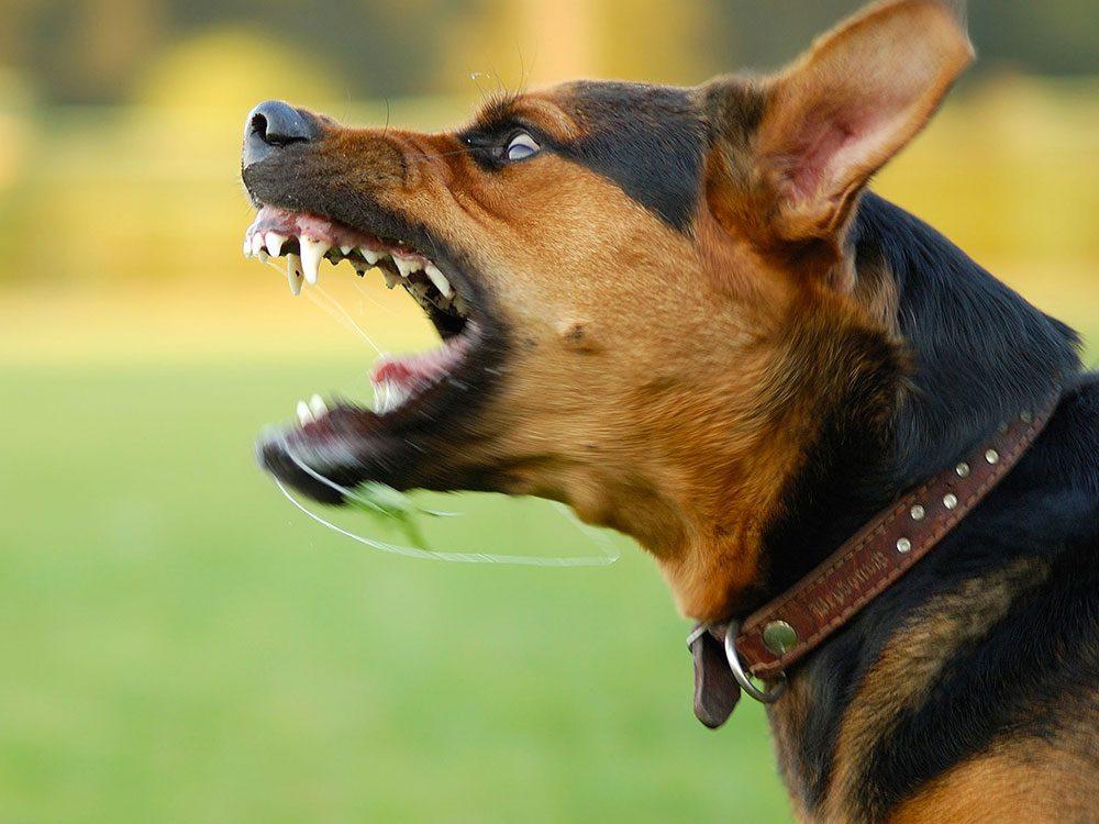 Les vétérinaires ne peuvent pas vous aider pour des problèmes de comportement .