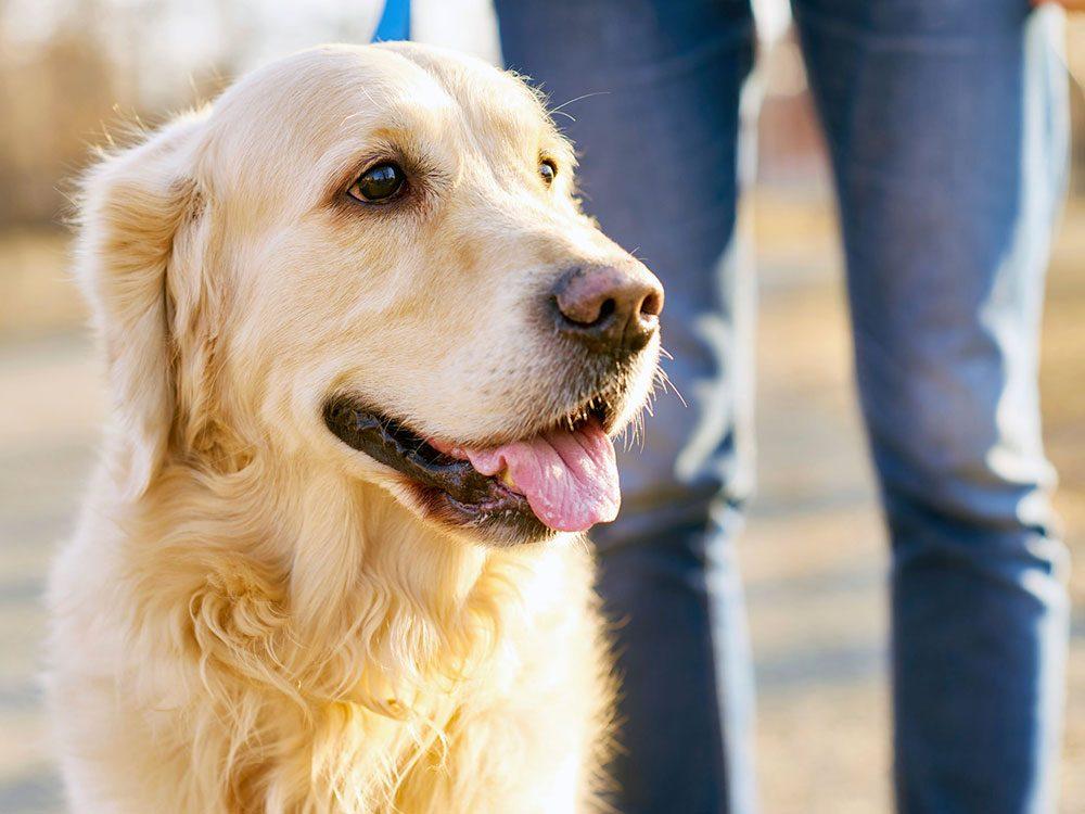 D'après le vétérinaire, il faudrait que votre chien porte une médaille.