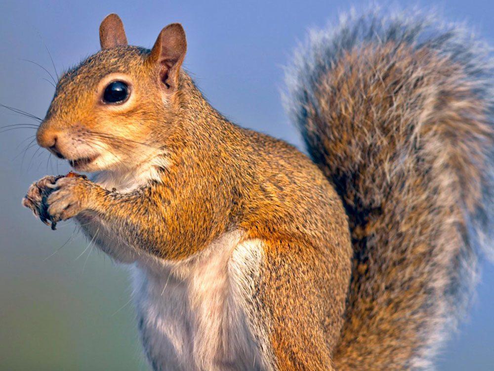 Le voisin tireur d'écureuils.