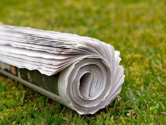 Le voisin allergique aux journaux.