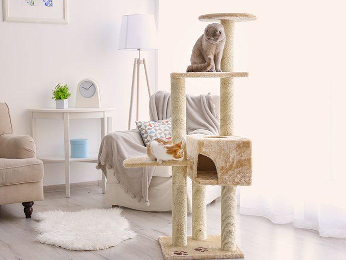 Les arbres à chats permettent aux félins d'intérieur de grimper et d'avoir un point de vue en hauteur.