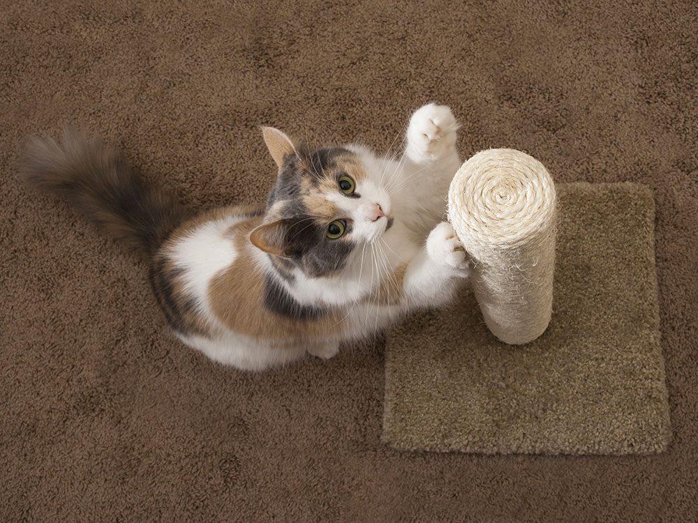 Assurez-vous de prévoir des poteaux à griffes pour votre chat d'intérieur.
