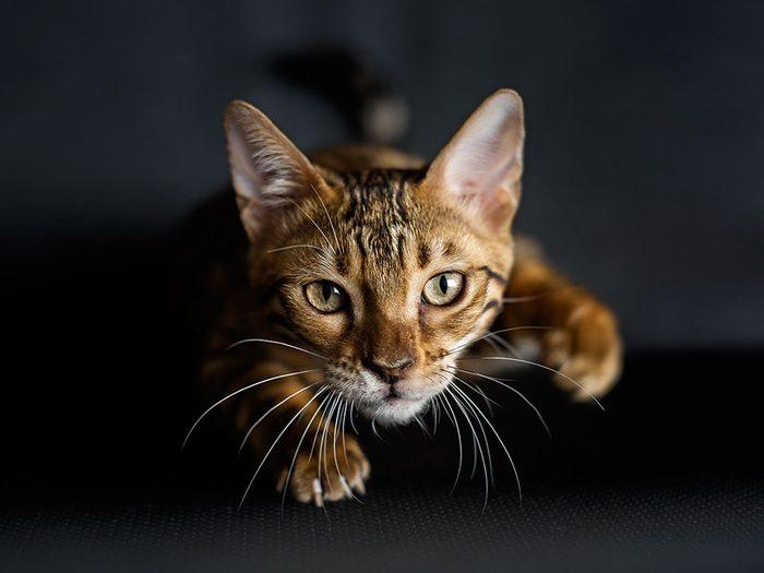 Les jouets peuvent aider à simuler l'expérience de chasse des chats d'intérieur.