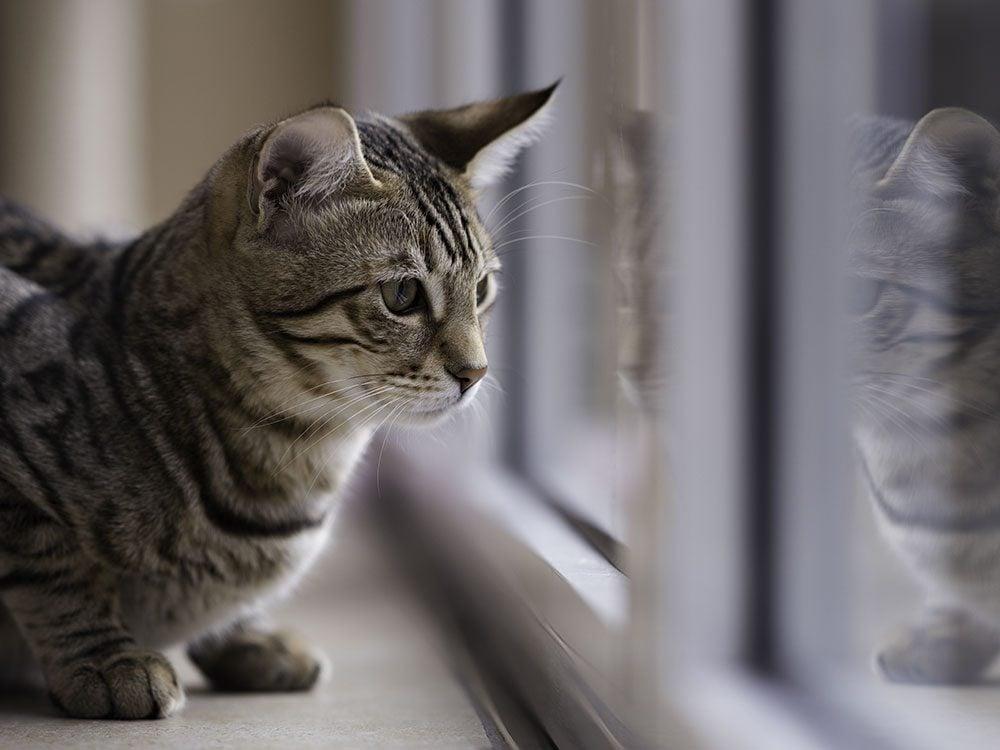 Les chats d'intérieur ont moins d'impact sur la faune.