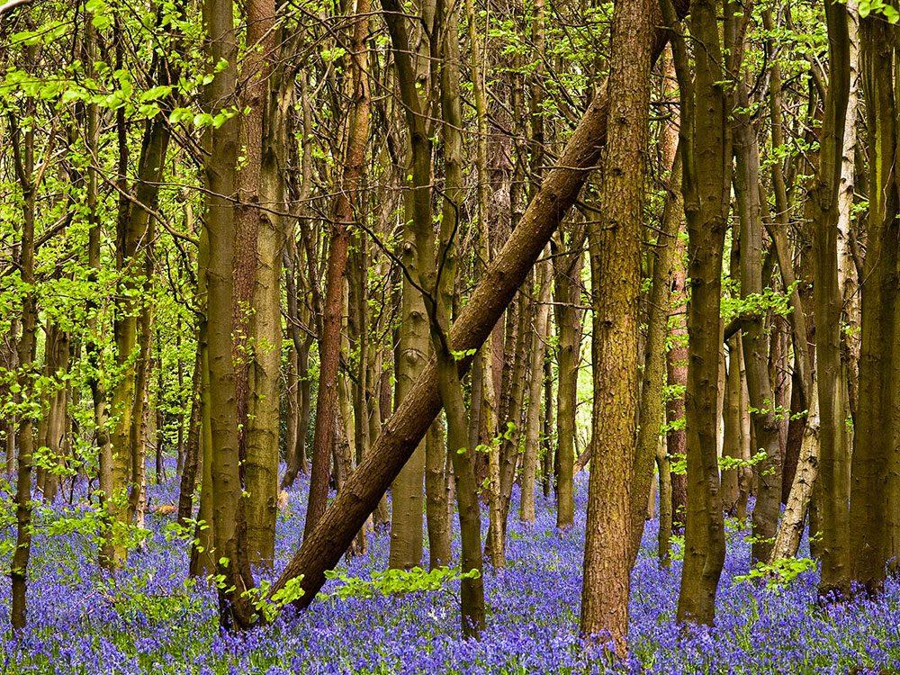Faits incroyables: il y a plus d'arbres sur terre que d'étoiles dans notre galaxie.