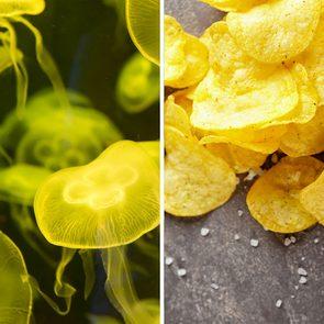 Alimentation: des goûters à la méduse.