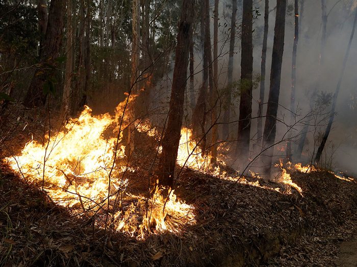 Certains animaux risquent de disparaître à causes des incendies en Australie.