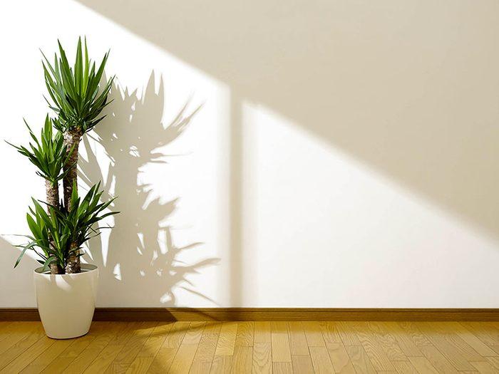 Bruits dans la maison: attention aux bruits d'écoulement dans les murs.