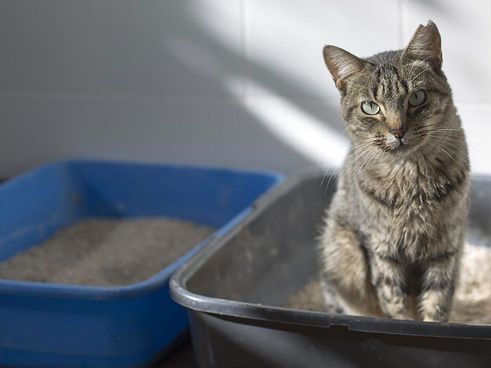 Dormir avec son chat c'est aussi s'exposer à des impuretés du bac de litière.
