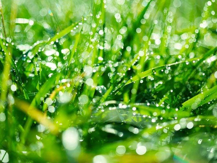 Nettoyer la maison: étendez votre grill sur la pelouse pendant toute une nuit.