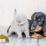 13 ingrédients à éviter dans la nourriture pour animaux de compagnie