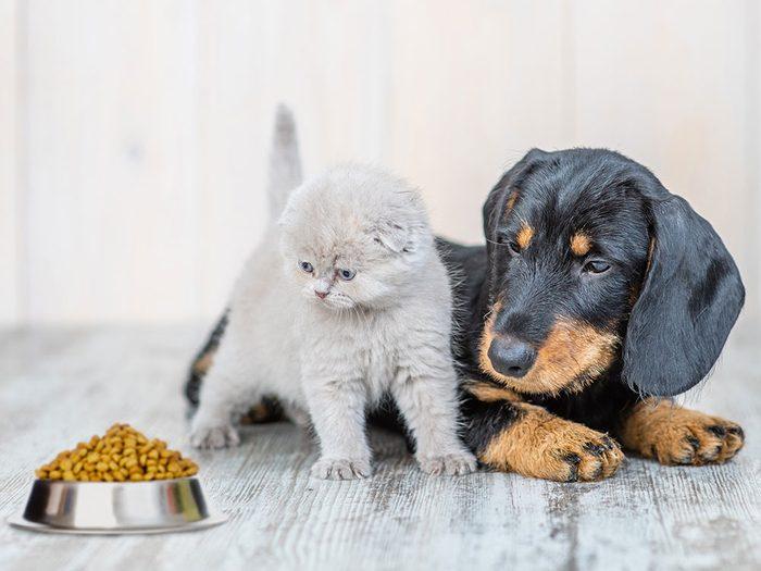 """Scrutez l""""étiquette de la nourriture pour animaux."""