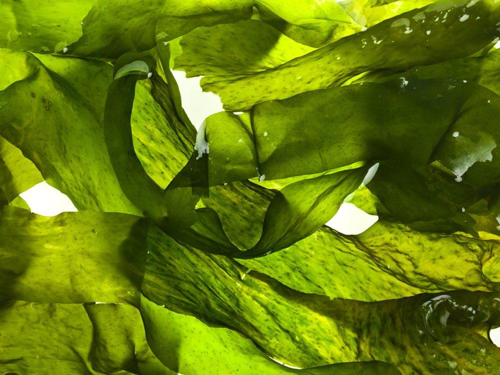 Les spécialistes de la thyroïde évitent les algues.