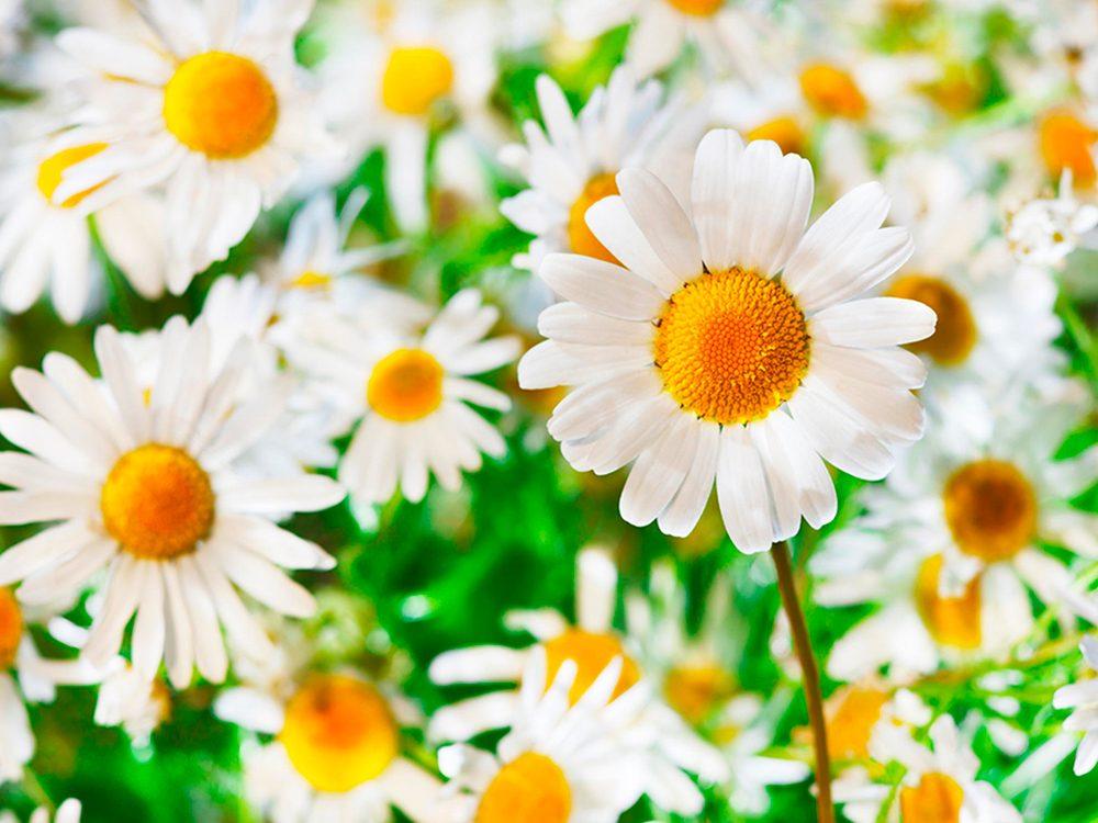 Le pollen et brûlure d'estomac, signes d'allergies.