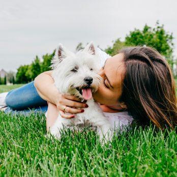 Le chien, meilleur ami du cœur