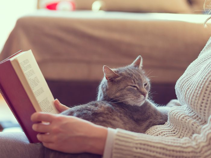 Comportement du chat: le ronronnement demeure un mystère.