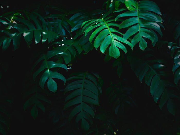 Stacey et Michael, tous deux perdus dans la jungle, ne pouvaient rien faire.