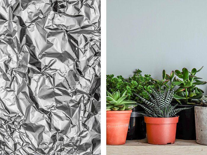 Un solarium pour les plantes avec de l'aluminium ménager.