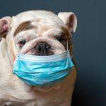 COVID-19: votre chien peut-il attraper le coronavirus?