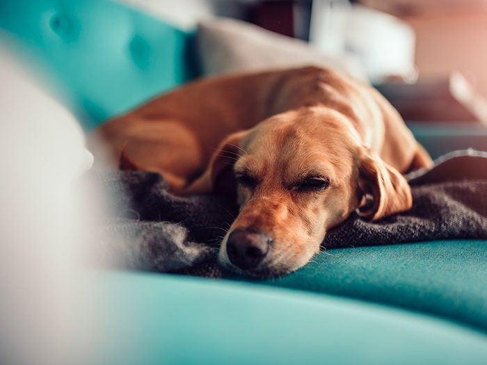 Dois-je m'inquiéter de la propagation du nouveau coronavirus chez les chiens?