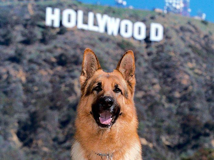 Acteur est aussi un métier pour les chiens.