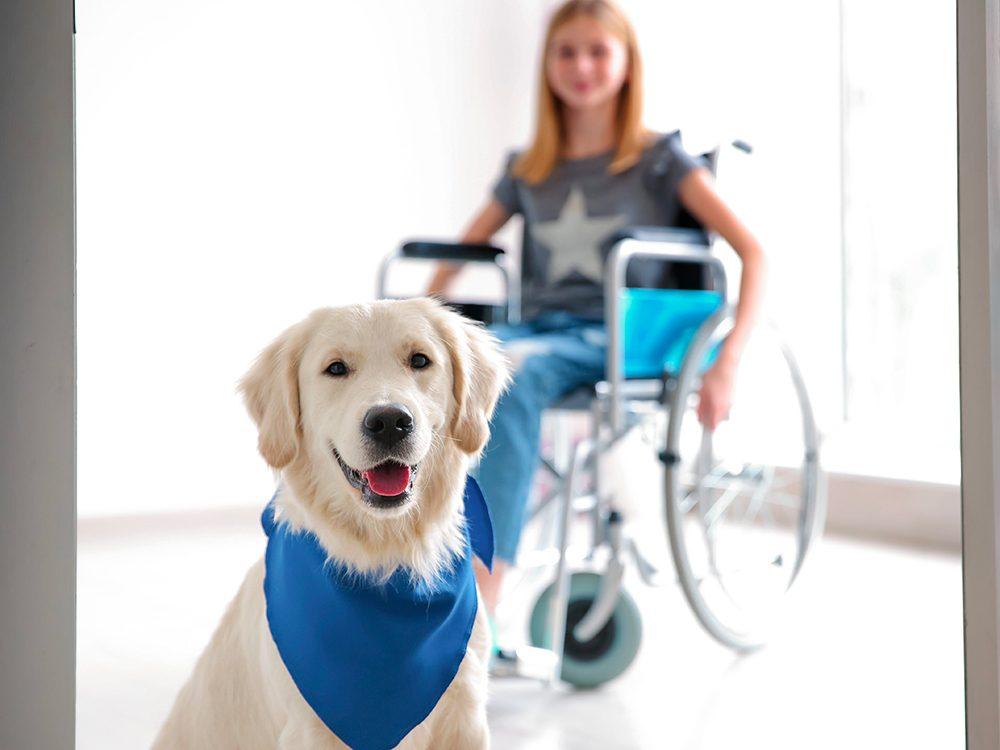 Chien d'alerte médicale est l'un des métiers pour chiens.