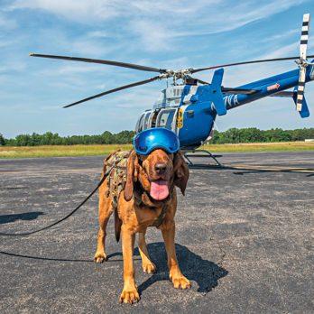 10 vrais métiers pour les chiens