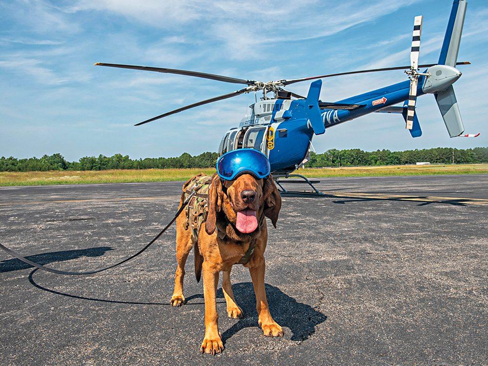 Chien de détection est l'un des métiers pour chiens.