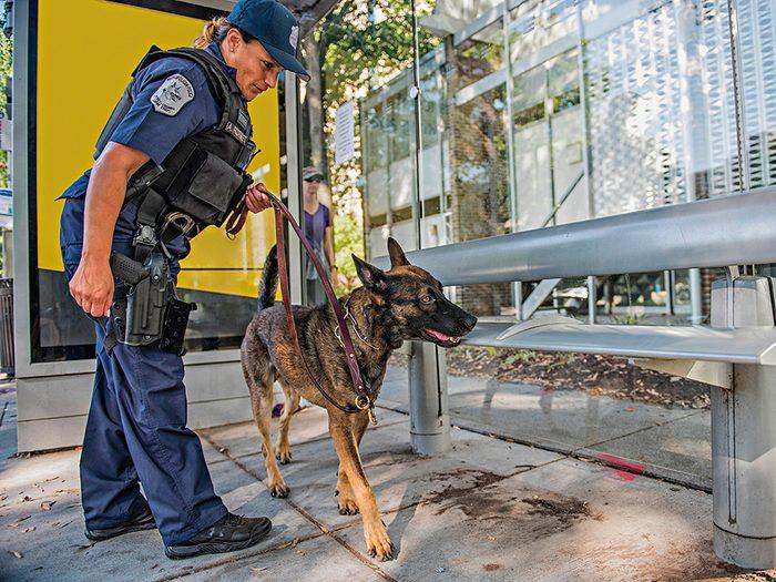 Policier est aussi un métiers pour les chiens.