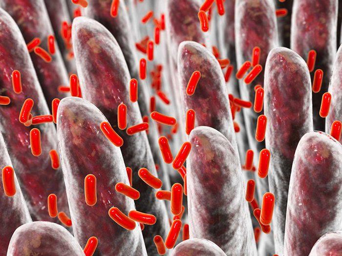 Mieux comprendre l'importance des bactéries intestinales pour vivre plus vieux.