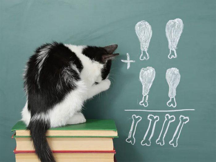 Un chat peut apprendre, parfois même mieux qu'un chien!