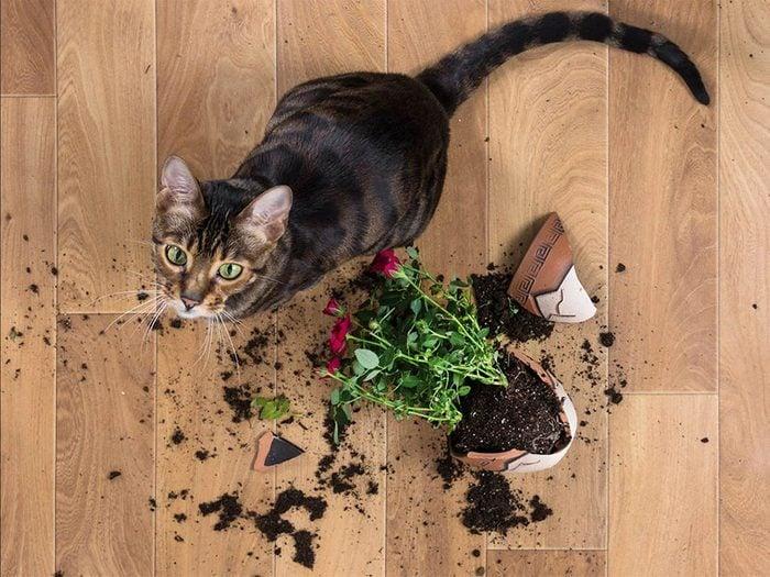 Chien et chat voient les choses différemment de vous.
