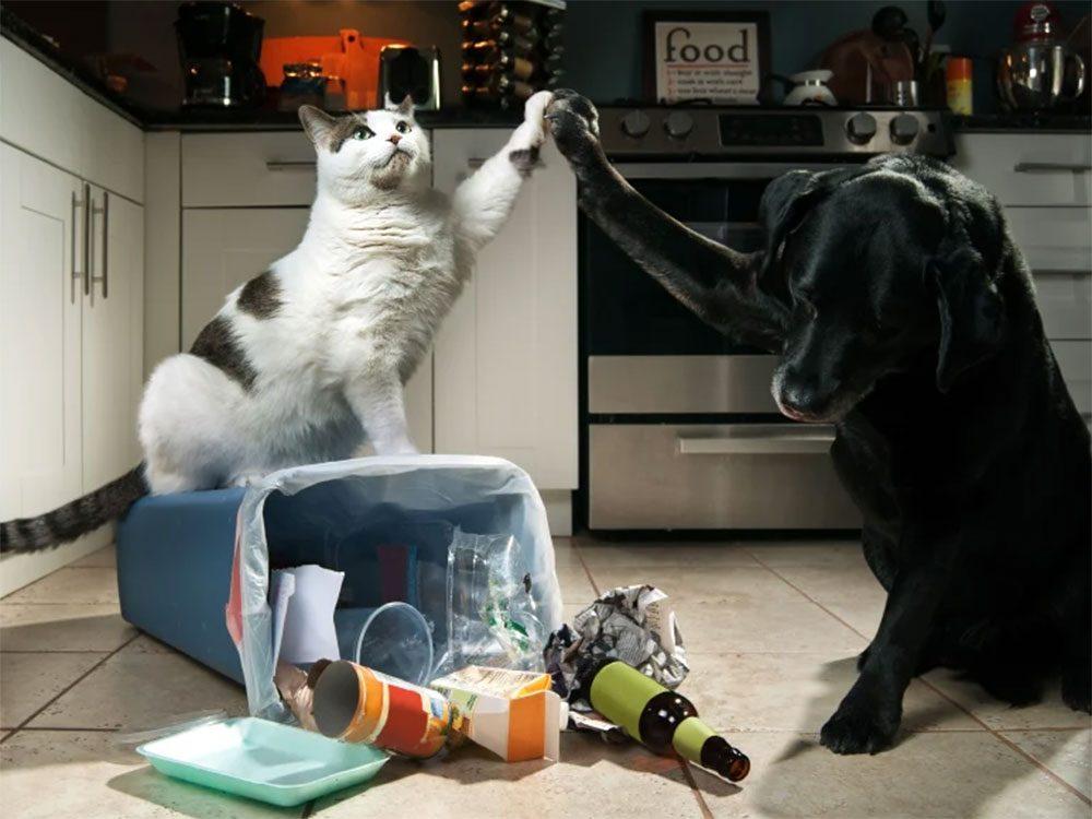N'attendez pas pour corriger les mauvaises habitudes de votre chien ou votre chat.