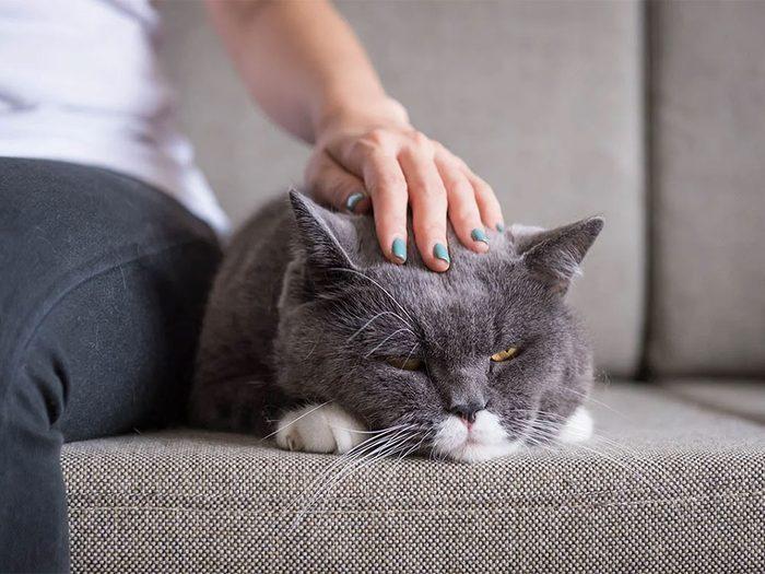 N'insistez pas si votre chat ou votre chien se raidit lorsque vous lui caressez le dos.