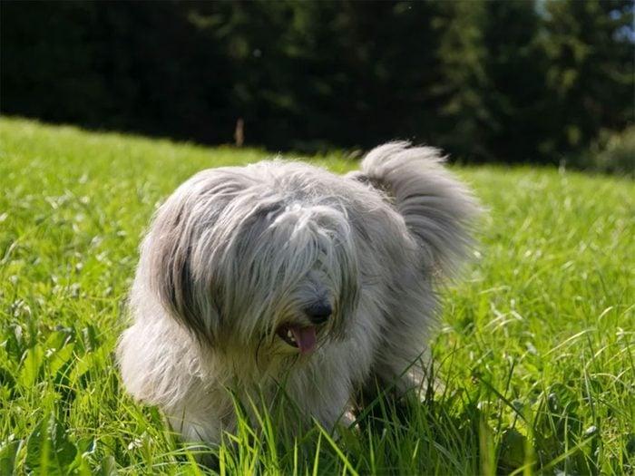 L'herbe peut être bonne pour votre chien ou votre chat.