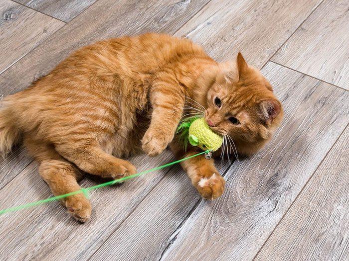 Plus de jeu, moins de sommeil pour votre chat et votre chien.