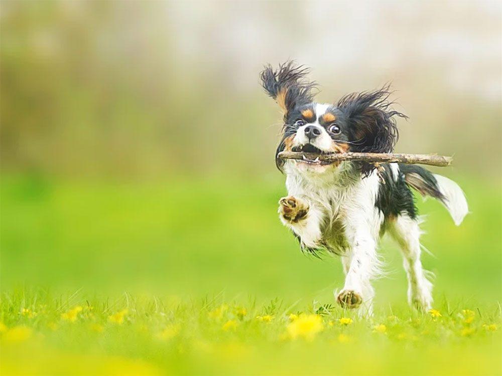 Jouez souvent avec chien ou votre chat.