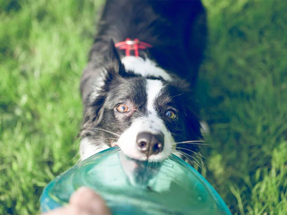 Le plastique peut faire mal aux dents de votre chien ou de votre chat.