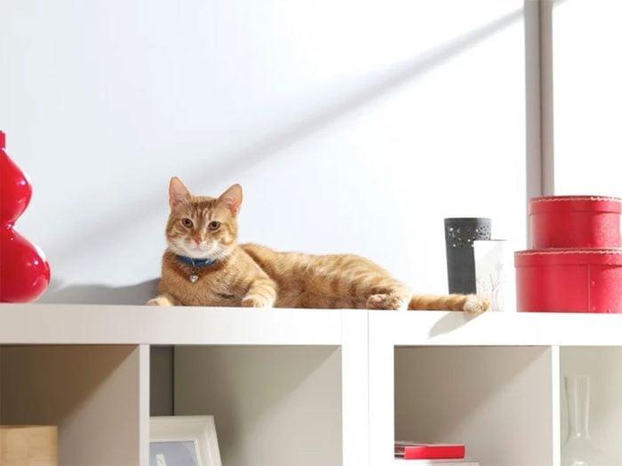 Ne laissez pas prendre de vilaines habitudes à votre chien ou à votre chat!