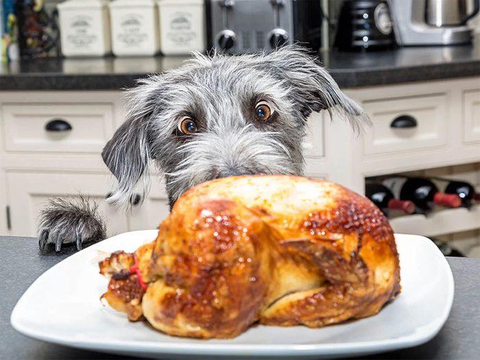 Donnez un peu de gras à votre chien ou à votre chat.