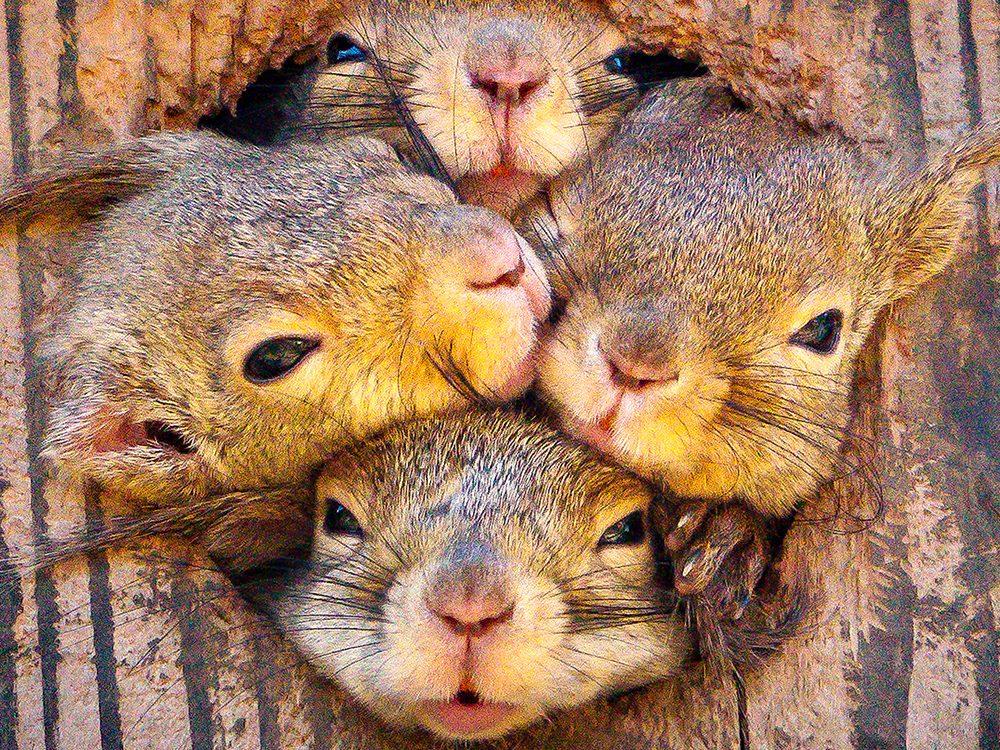 Densité de population: même les écureuils sont serrés.