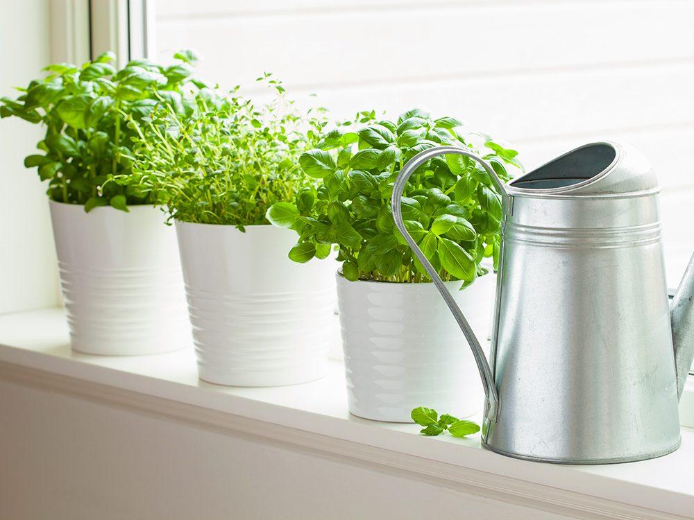 Les herbes aromatiques sont faciles à cultiver.