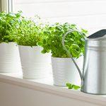 12 aliments faciles à cultiver à la maison