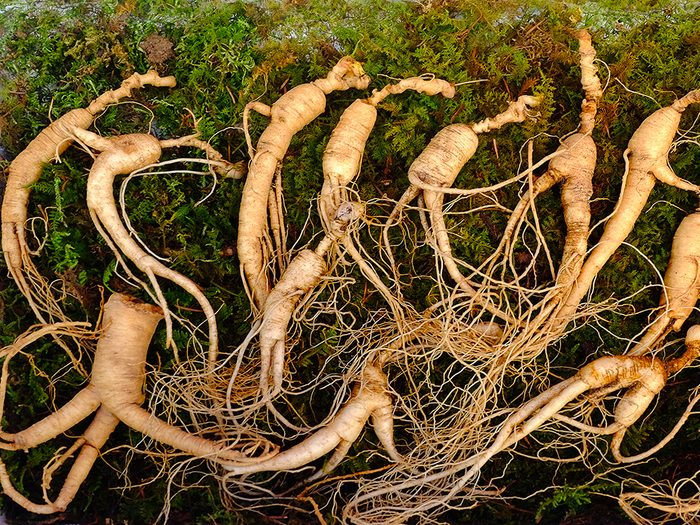 Le ginseng sauvage est une espèce menacée.