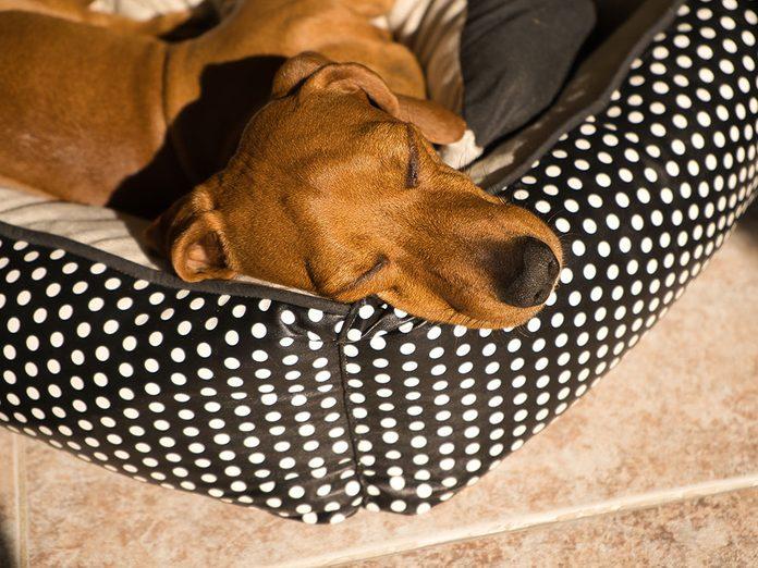 Nettoyez le coussin de votre animal lors du grand ménage de printemps.