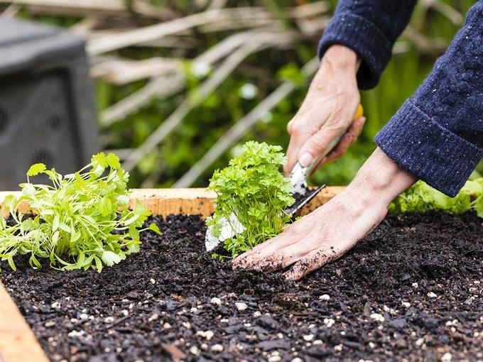 Les bienfaits étonnants du jardinage pour la santé.