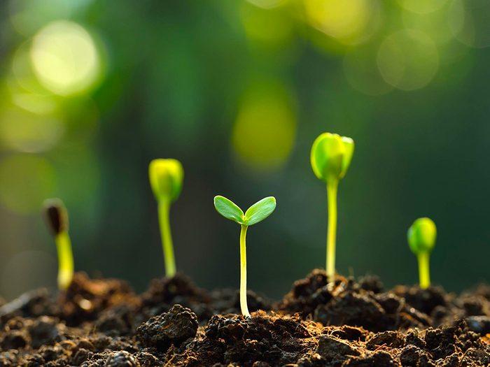 Le jardinage stimule votre cerveau.