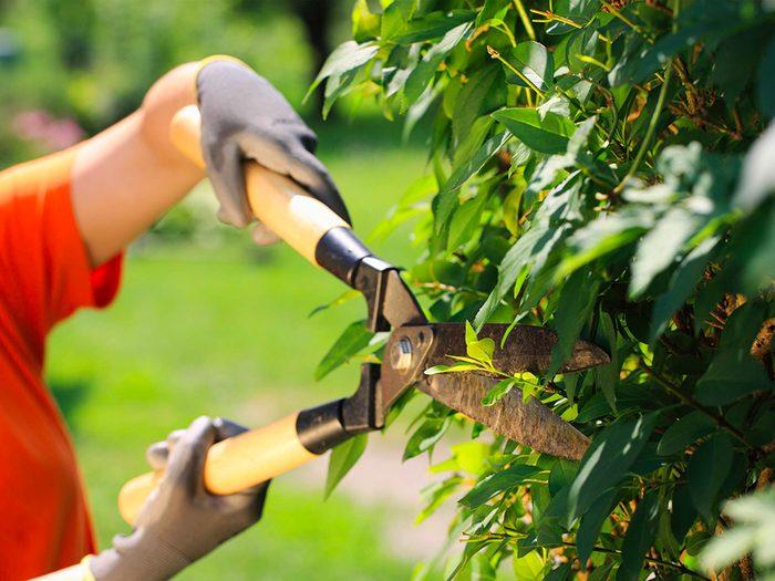 Le jardinage améliore la coordination et la force de vos mains.