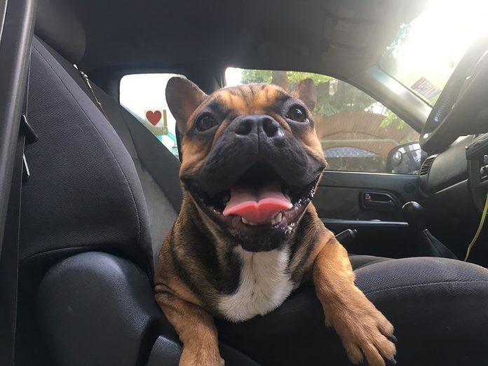 Comment laver sa voiture quand on a un animal?