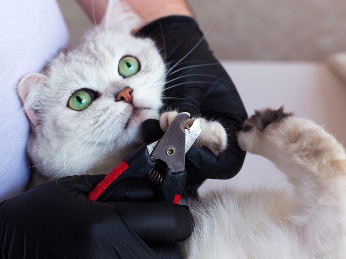Toilettage: laver son chat et lui couper les griffes.